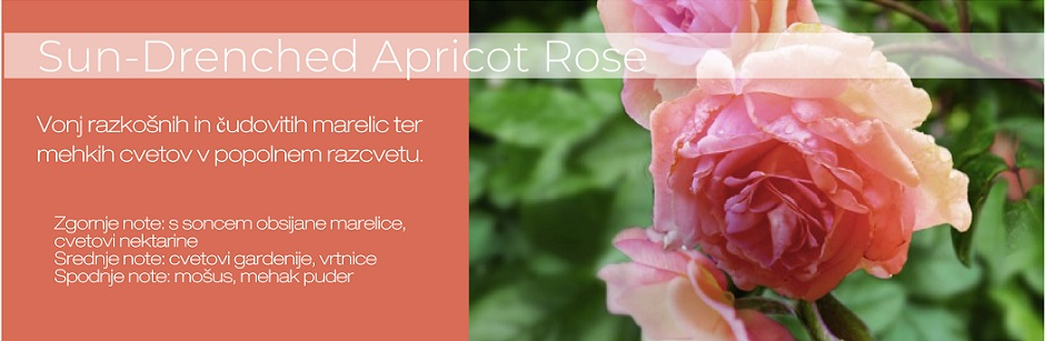 Sun_Drenched Apricot Rose